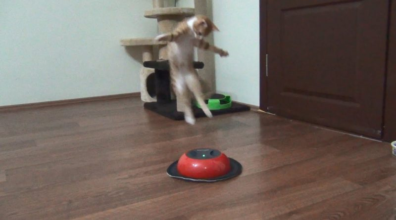 Kitten Plays With Cleaning Robot 😸 🤖