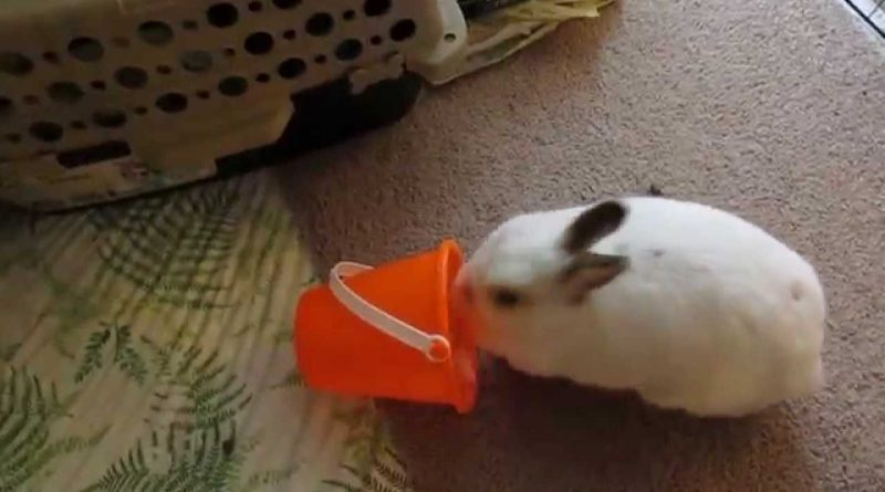 Daisy The Bunny Tries To Throw Her Bucket