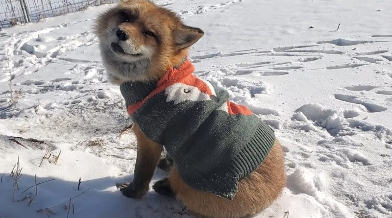 Finnegan Fox Looking Dapper In His New Sweater