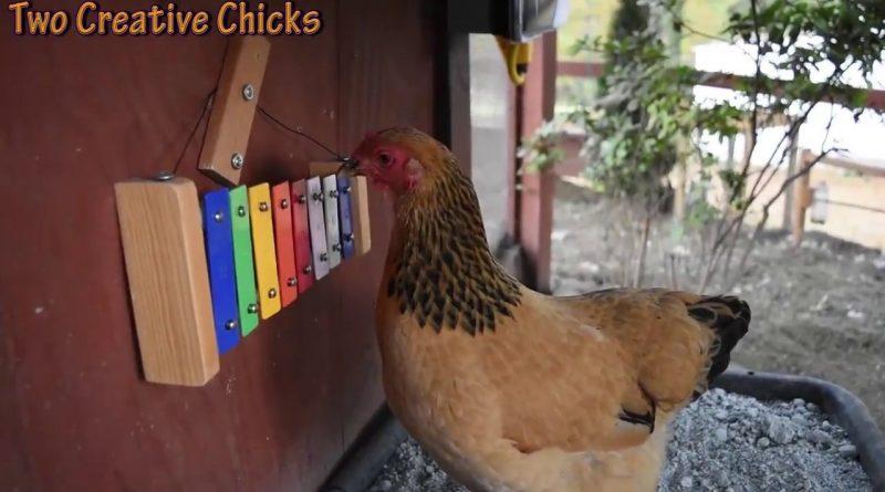 Musical Hens Enjoying Life 🐔 🐥 🎼 🎵