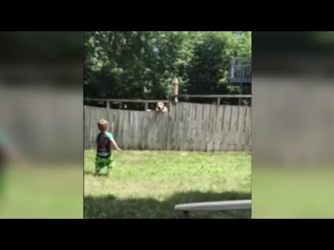 Toddler Plays Catch With Neighbor's Dog Over Fence