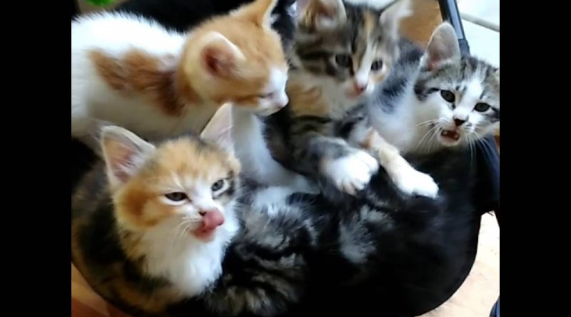 Good Morning, From A Pack Of Sweet Kittens! 😸 😸 😸 😸
