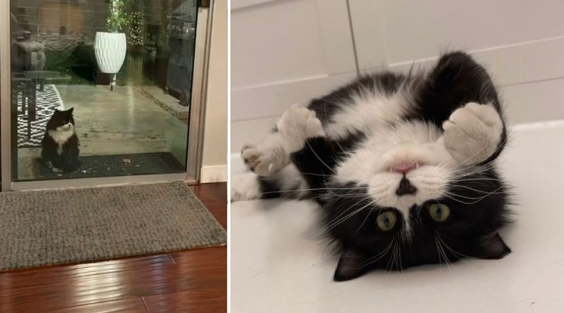 Buddy The Cat Finds Kitten Friends And A Forever Home