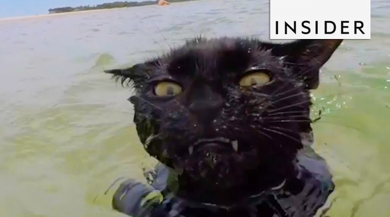 Nathan The Beach Cat Loves To Go Swimming