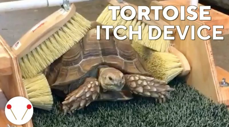 Man Designed A Scratching Device To Help Cute Tortoise Scratch Any Itch
