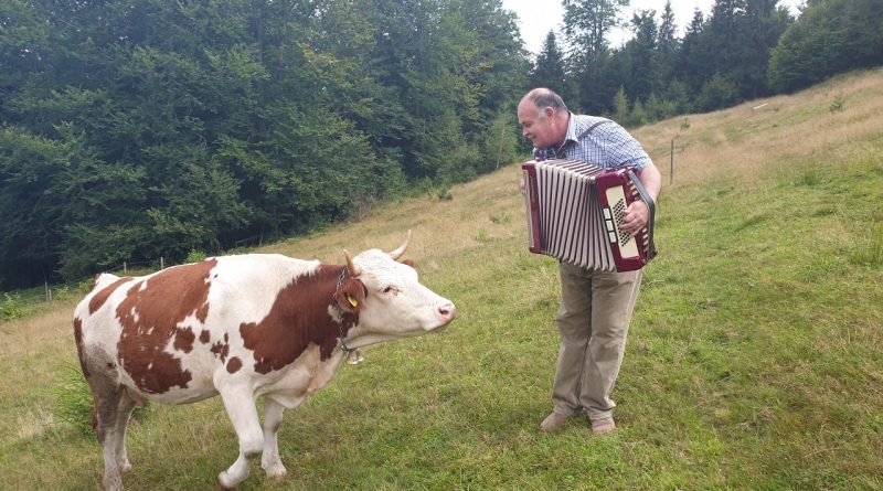 This Cow Loves The Accordion 🐄 💘 🪗