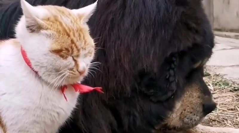 Cat Meets His Best Friend Dog's Puppies 🐈 😻 🐕 🐶