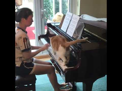 Cat Improves Human's Piano Playing 🐈 🎹