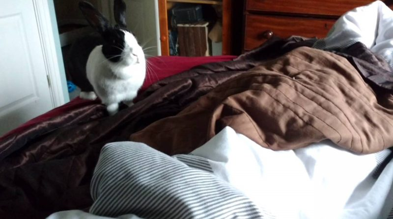 This Honking Rabbit Is Super Happy 🐇