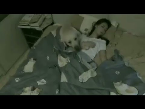 Dog Makes Sure His Human Mommy Stays Covered