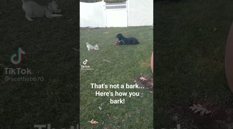 Adult Dog Teaches Puppy How To Really Bark