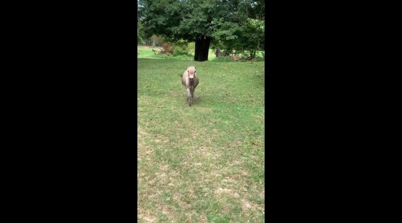 Donkey Is Very Happy To See His Human Best Friend