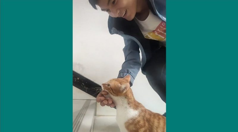 Cat Wants Her Human Friend To Help Her Deliver And Care For Her Kittens