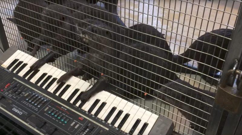 Animals Enjoy Playing Musical Instruments 🎼🎶❤