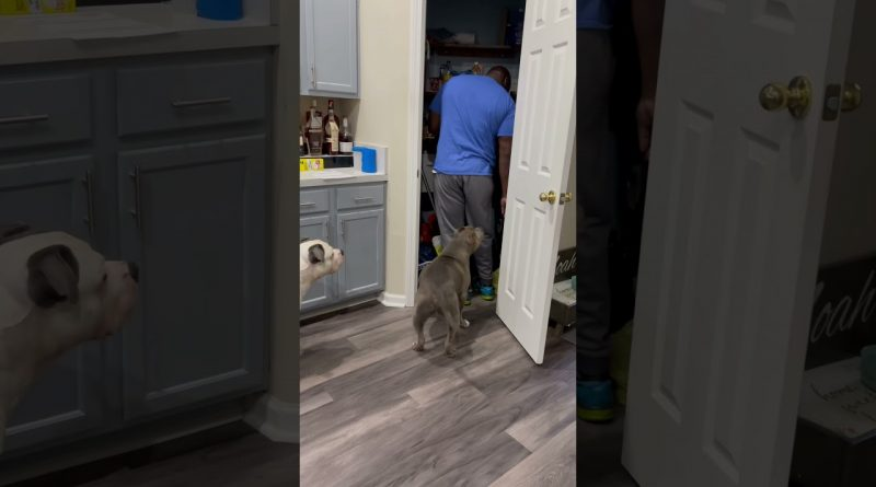 Man Gets Caught Sneaking Dogs Extra Treats
