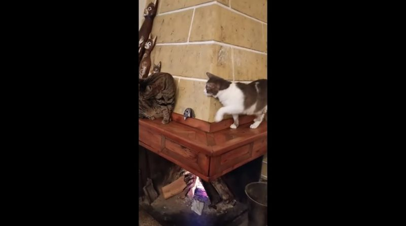 Sneaky Cat Acts Super Innocent When Caught Sneaking By Cat Friend