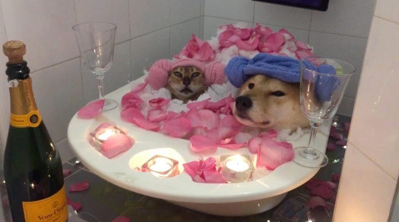Dog And Cat Enjoy A Bath Together