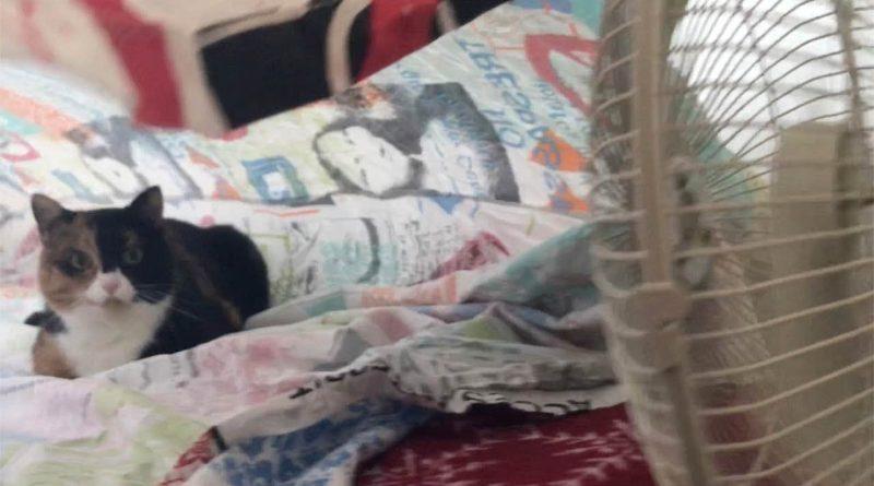 Cat Enjoying Her Cool Air Tent