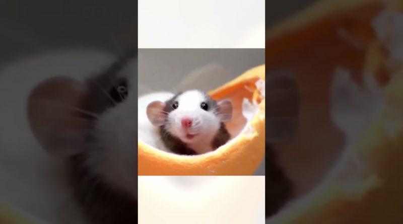 Smiling Mouse Is Enjoying Her Day