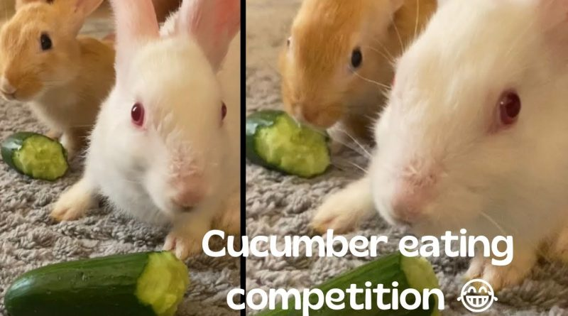 Bunnies Have A Cucumber Eating Contest