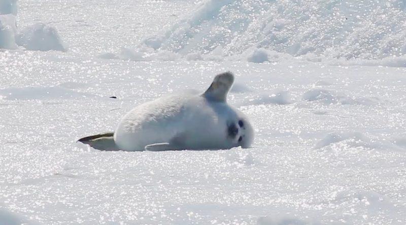 Baby Seal Laying Around Enjoying Life