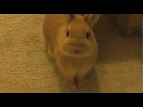 Cute Bunnies Play Tag 🐰