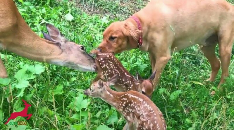 Dog And Deer Have Been Best Friends For 11 Years!