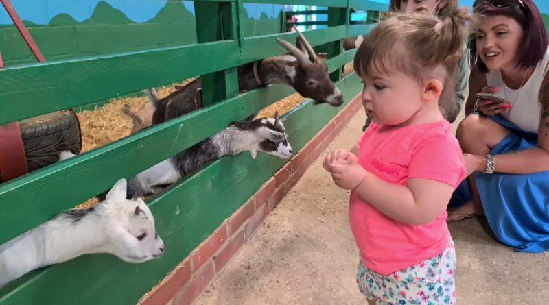 Human Kid Talks To Goat Kid