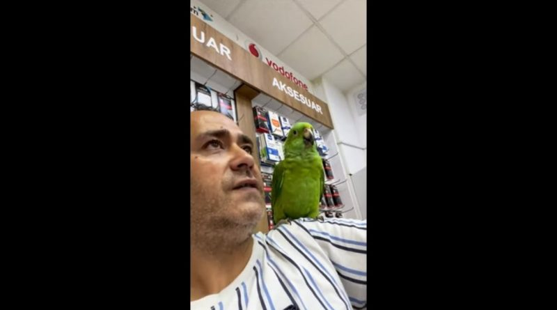 Parrot And Human Have The Same Laugh