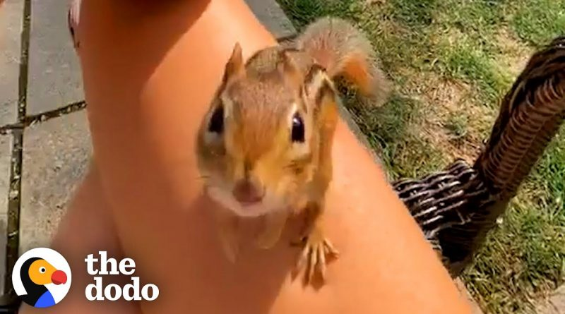 Charlie The Chipmunk Loves His Human Friend ❤ 🐿