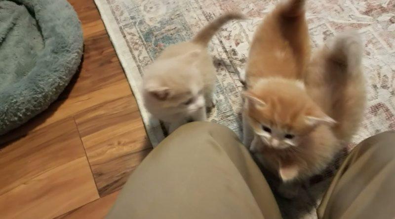 A Swarm Of Kitten Purrfection 😸
