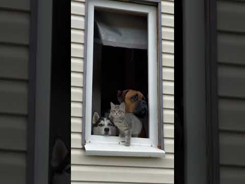 A Variety Of Animals Enjoy Looking Out The Same Window