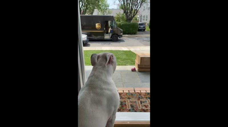 Good Doggie Gets A Treat From His Delivery Driver Friend