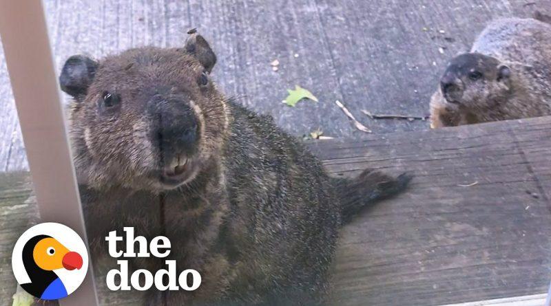 Groundhog Brings His Son To Visit His Human Friend