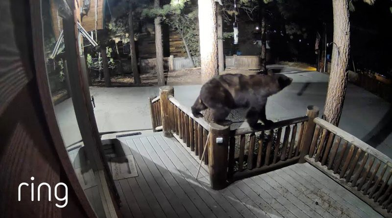Bear Does Some Fancy Gymnastics Outside Of Home 🏡 🐻
