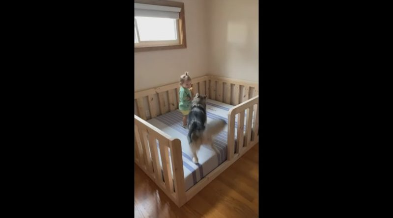 Baby And Dog Check Out Their New Bed