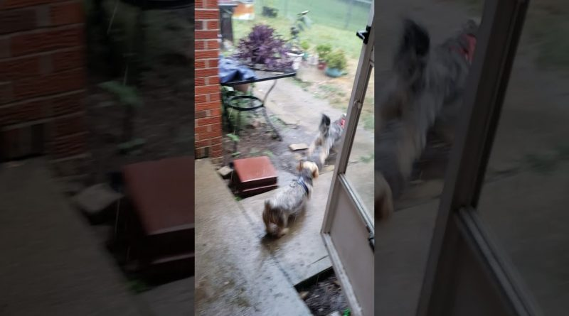 These Dogs Are Excited To Play Outside Until...