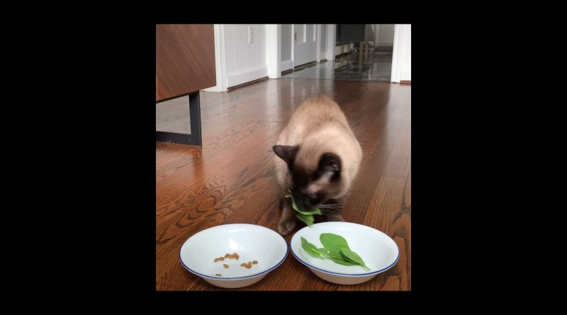 Cat Loves Spinach More Than Cat Food