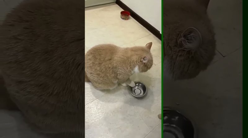 Cat Has Unique Way To Request More Food