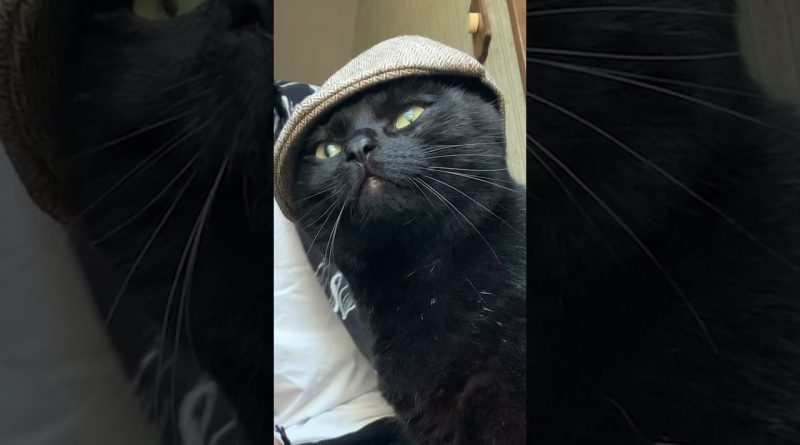 This Kitty Is Looking Quite Dapper In His Hat